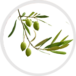 olive_branch_ingredient